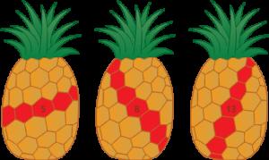 Fibonacci numbers in pineapples.